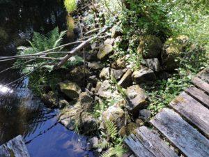 Schneider Creek Restoration
